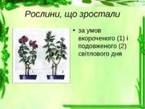 Рослини, що зростали за умов вкороченого (1) і подовженого (2) світлового дня