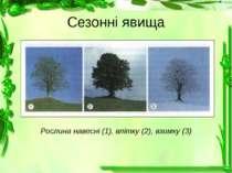 Сезонні явища Рослина навесні (1), влітку (2), взимку (3)