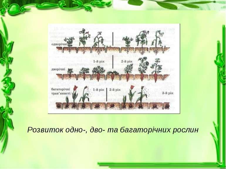 Розвиток одно-, дво- та багаторічних рослин