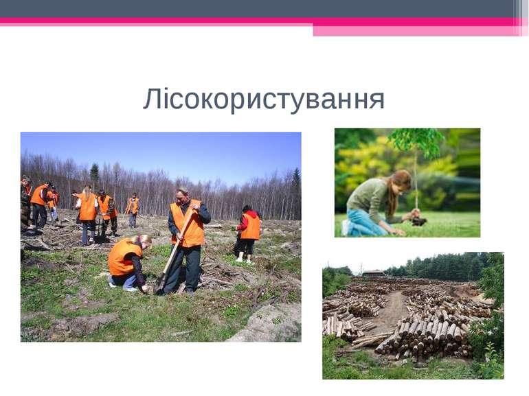 Лісокористування