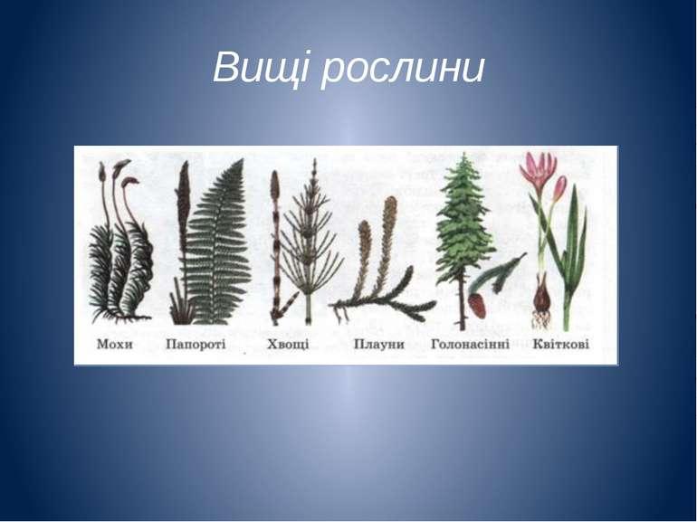 Вищі рослини