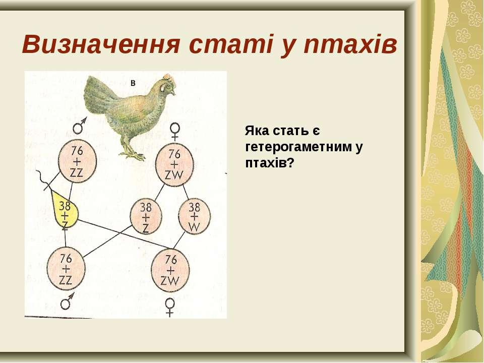 Визначення статі у птахів Яка стать є гетерогаметним у птахів?