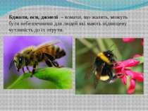 Бджоли, оси, джмелі – комахи, що жалять, можуть бути небезпечними для людей ...