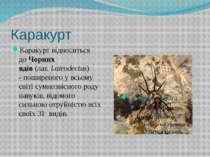Каракурт Каракурт відноситься доЧорних вдів(лат.Latrodectus) -поширеного ...