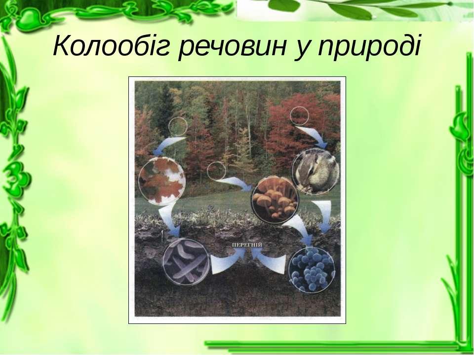 Колообіг речовин у природі