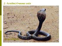 2. Аспідні.Очкова змія