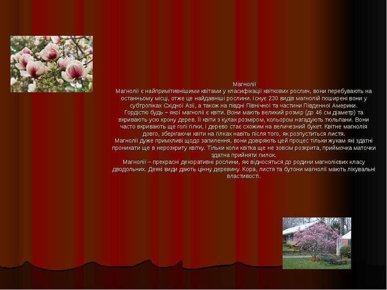 Магнолії Магнолії є найпримітивнішими квітами у класифікації квіткових рослин...