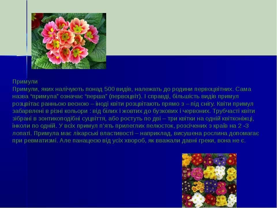 Примули Примули, яких налічують понад 500 видів, належать до родини первоцвіт...