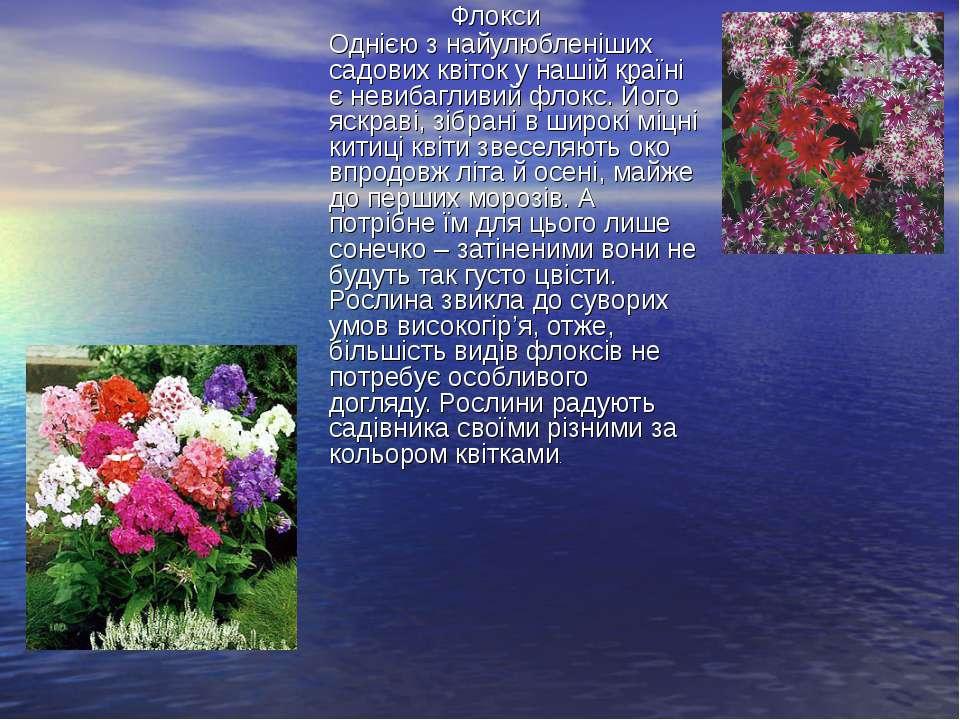 Флокси Однією з найулюбленіших садових квіток у нашій країні є невибагливий ф...