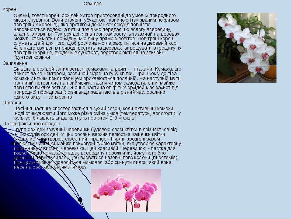 Орхідея Корені Сильні, товстікореніорхідей хитро пристосовані до умов їх пр...