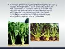 У Криму є дикорослі родичі цукрового буряку, правда, ці гібриди непродуктивні...