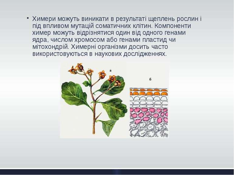 Химери можуть виникати в результаті щеплень рослин і під впливом мутацій сома...