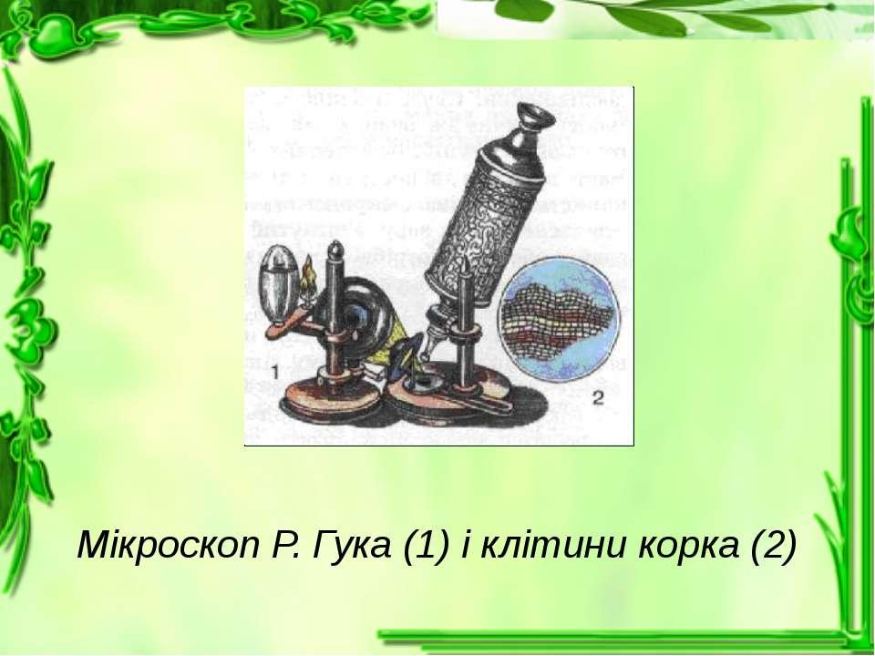 Мікроскоп Р. Гука (1) і клітини корка (2)