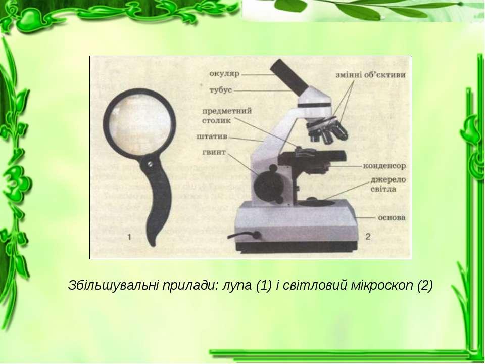 Збільшувальні прилади: лупа (1) і світловий мікроскоп (2)