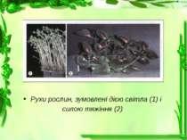 Рухи рослин, зумовлені дією світла (1) і силою тяжіння (2)