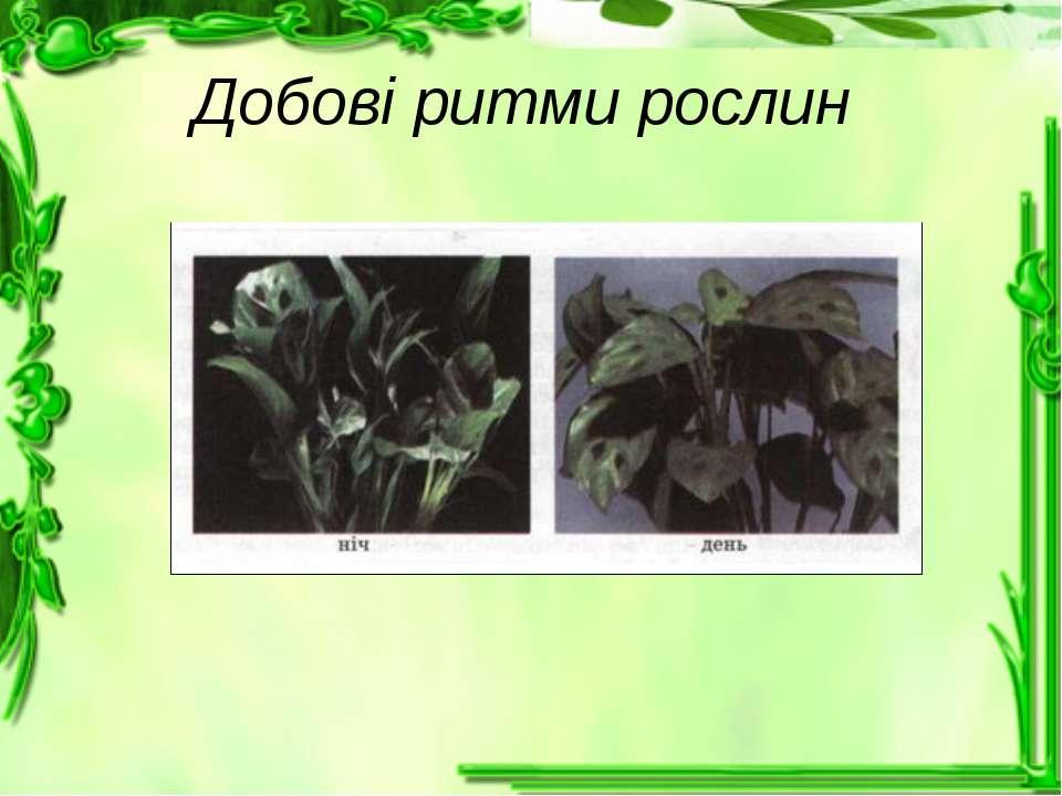 Добові ритми рослин