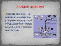 Химерні тварини - це генетичні мозаїки, що утворяться в результаті об'єднання...