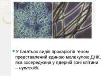 У багатьох видів прокаріотів геном представлений єдиною молекулою ДНК, яка зо...