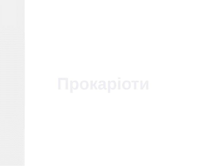 Прокаріоти