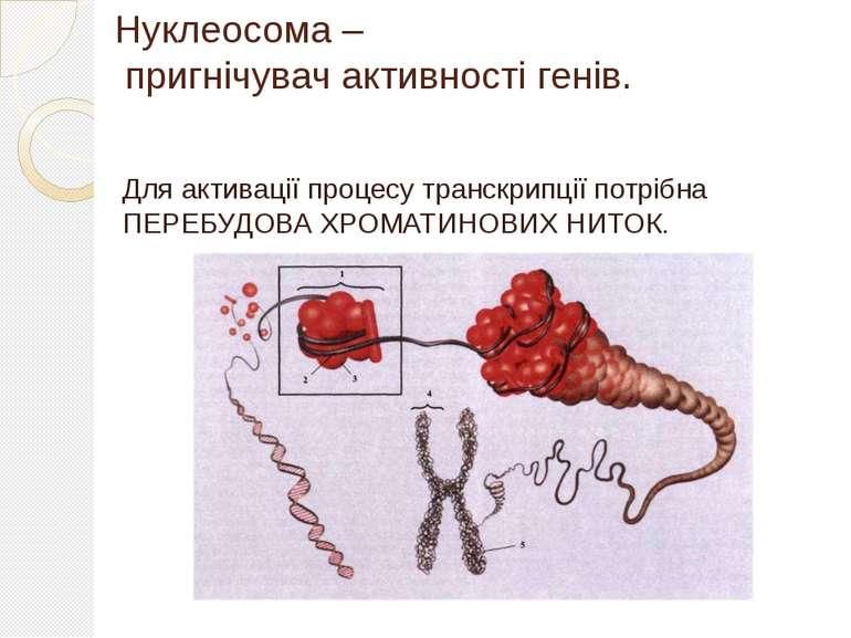 Нуклеосома – пригнічувач активності генів. Для активації процесу транскрипції...