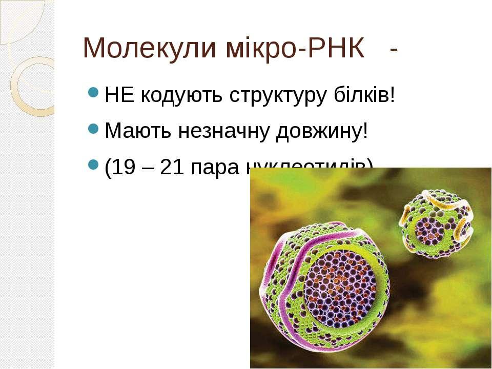 Молекули мікро-РНК - НЕ кодують структуру білків! Мають незначну довжину! (19...