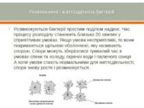 Розмноження і життєздатність бактерій Розмножуються бактерії простим поділом ...