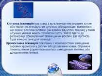 Клітинна інженерія пов'язана з культивуванням окремих клітин або тканин на сп...