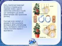 Суть генетичної інженерії полягає в переміщенні окремих генів з одного органі...