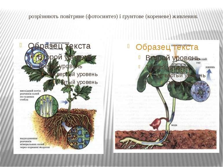 розрізняють повітряне (фотосинтез) і ґрунтове (кореневе) живлення.