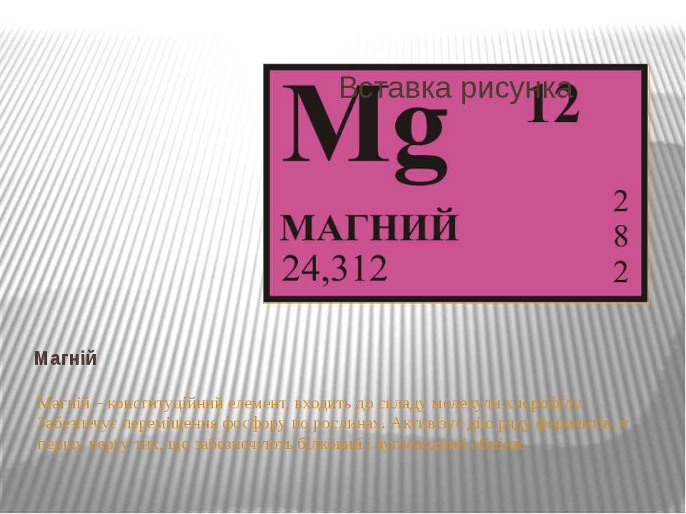 Магній Магній – конституційний елемент, входить до складу молекули хлорофілу....