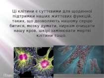 На відміну від звичайних клітин, приречених виконувати чітко визначені функці...