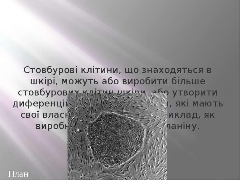 Потрапляючи в організм під час трансплантації, СК продовжують ділитися й самі...