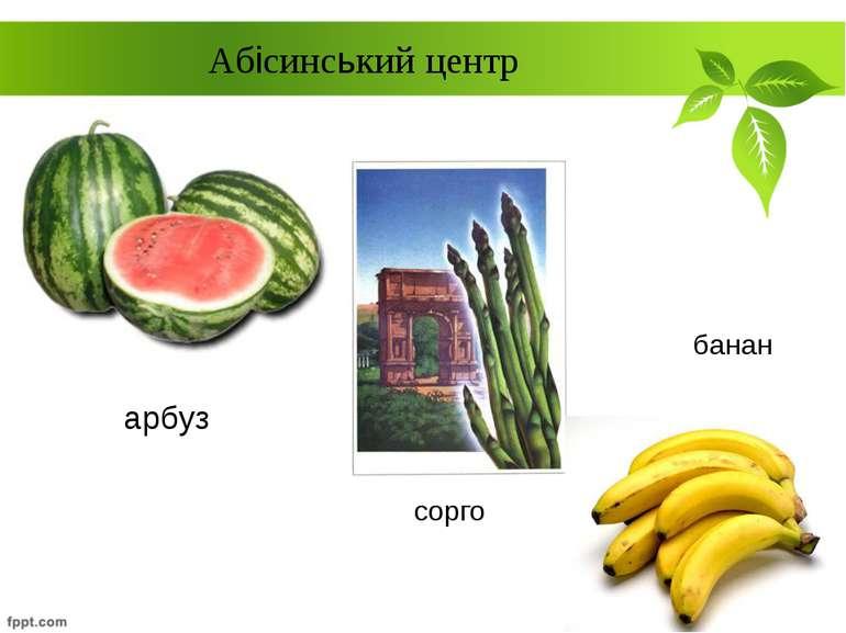 арбуз Абісинський центр сорго банан