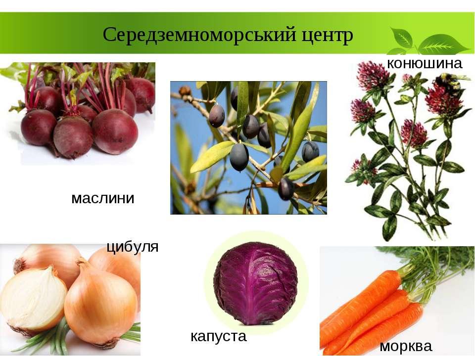 Середземноморський центр маслини капуста конюшина морква цибуля