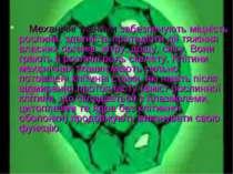 Механічні тканини забезпечують міцність рослини, здатність протидіяти дії тяж...