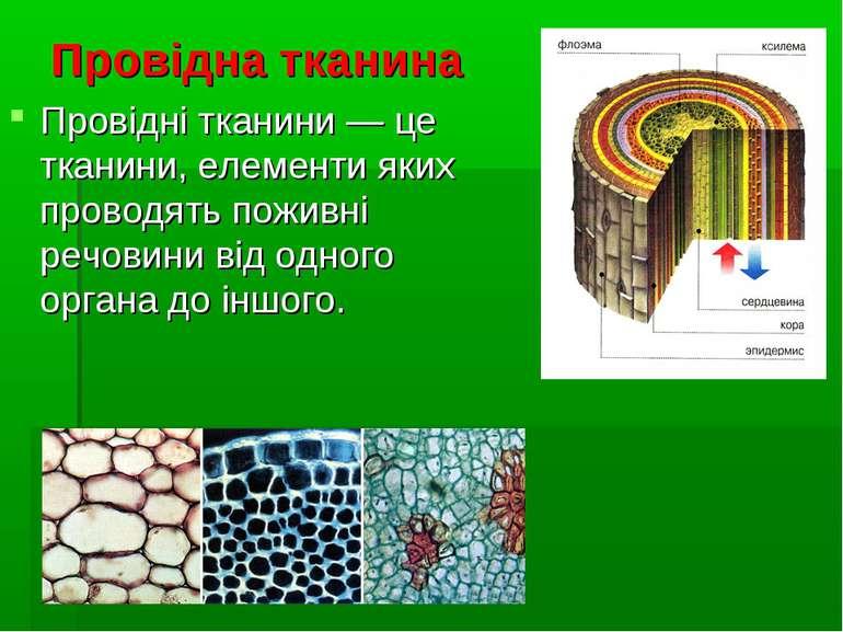 Провідна тканина Провідні тканини — це тканини, елементи яких проводять пожив...