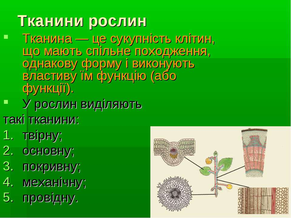 Тканини рослин Тканина — це сукупність клітин, що мають спільне походження, о...