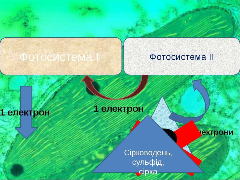 Фотосистема І Фотосистема ІІ Фотоліз води 4 електрони 1 електрон 1 електрон ?...