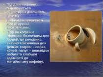 Під дією кофеїну підсилюється секреторна діяльність шлунку. Під дією кофеїну ...