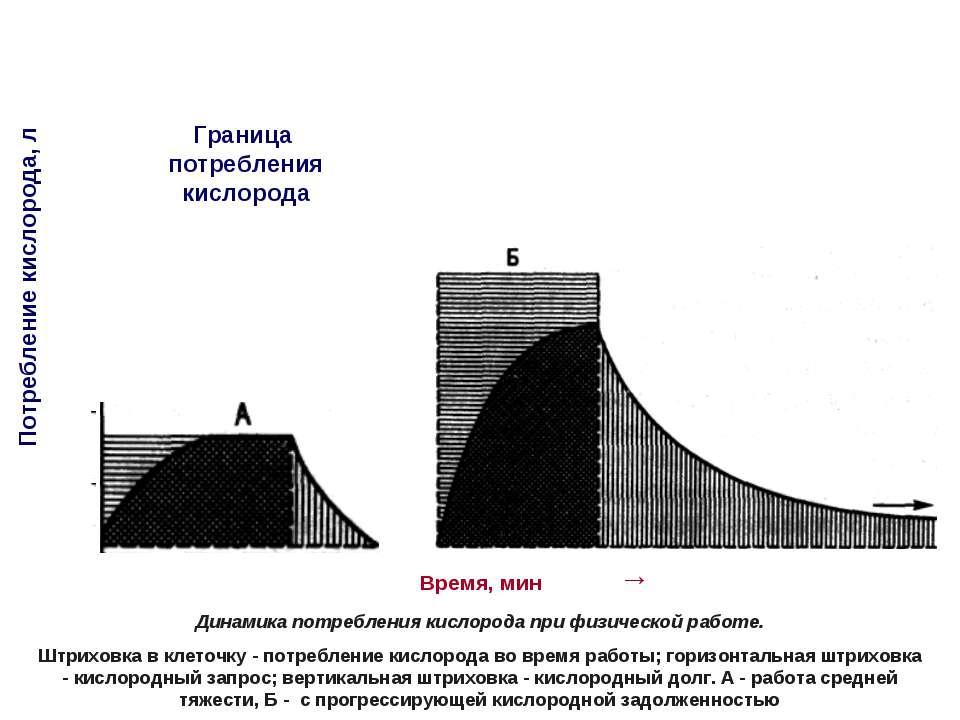 Время, мин → Потребление кислорода, л 1 2 3 4 5 6 7 Граница потребления кисло...