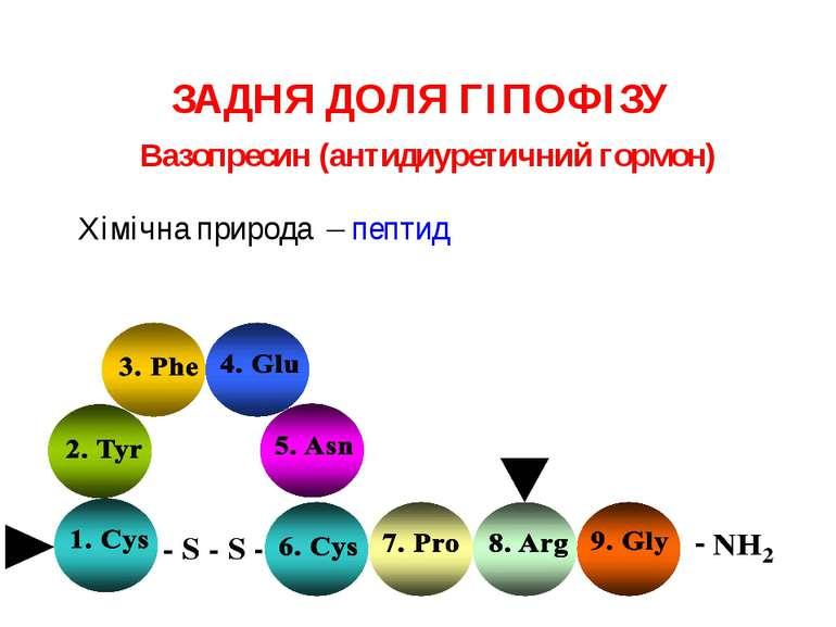 ЗАДНЯ ДОЛЯ ГІПОФІЗУ Хімічна природа – пептид Вазопресин (антидиуретичний гормон)