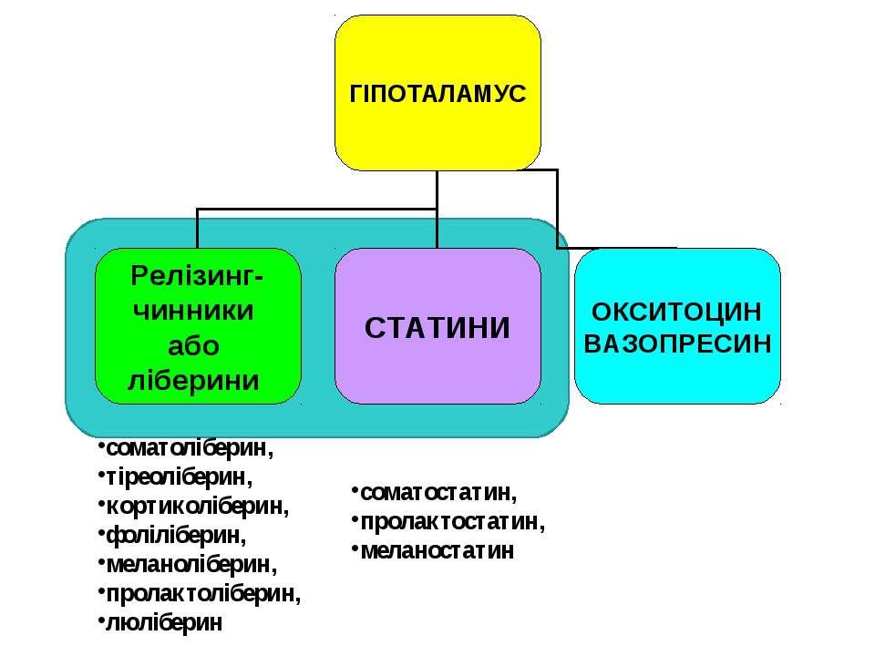 соматоліберин, тіреоліберин, кортиколіберин, фоліліберин, меланоліберин, прол...