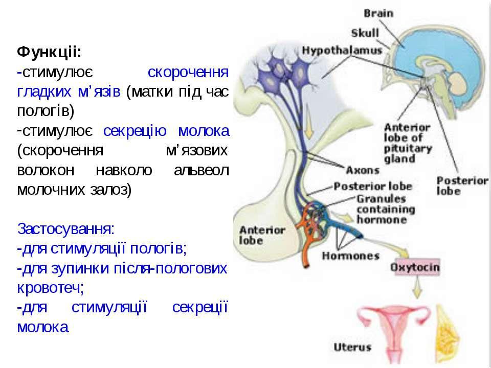 Функціі: -стимулює скорочення гладких м'язів (матки під час пологів) стимулює...