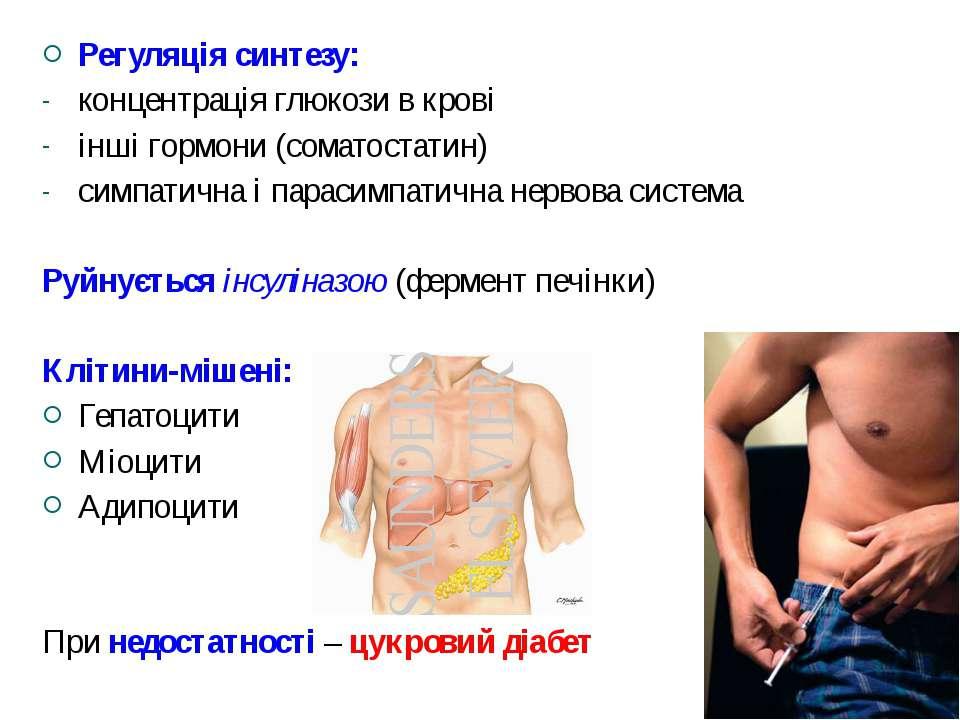 Регуляція синтезу: концентрація глюкози в крові інші гормони (соматостатин) с...