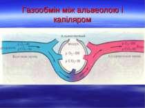 Газообмін між альвеолою і капіляром