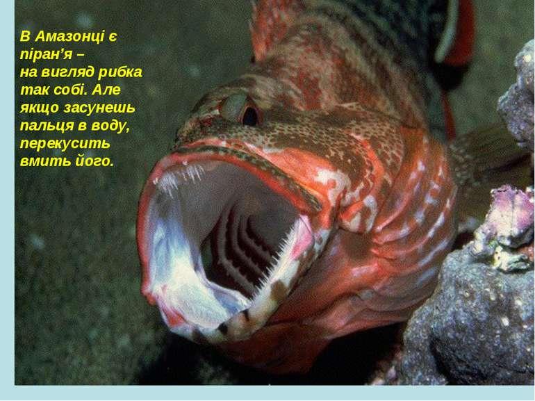 В Амазонці є піран'я – на вигляд рибка так собі. Але якщо засунешь пальця в в...