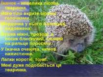 Їжачок – невелика лісова тваринка. Його тіло вкрите сірими голочками. Мордочк...