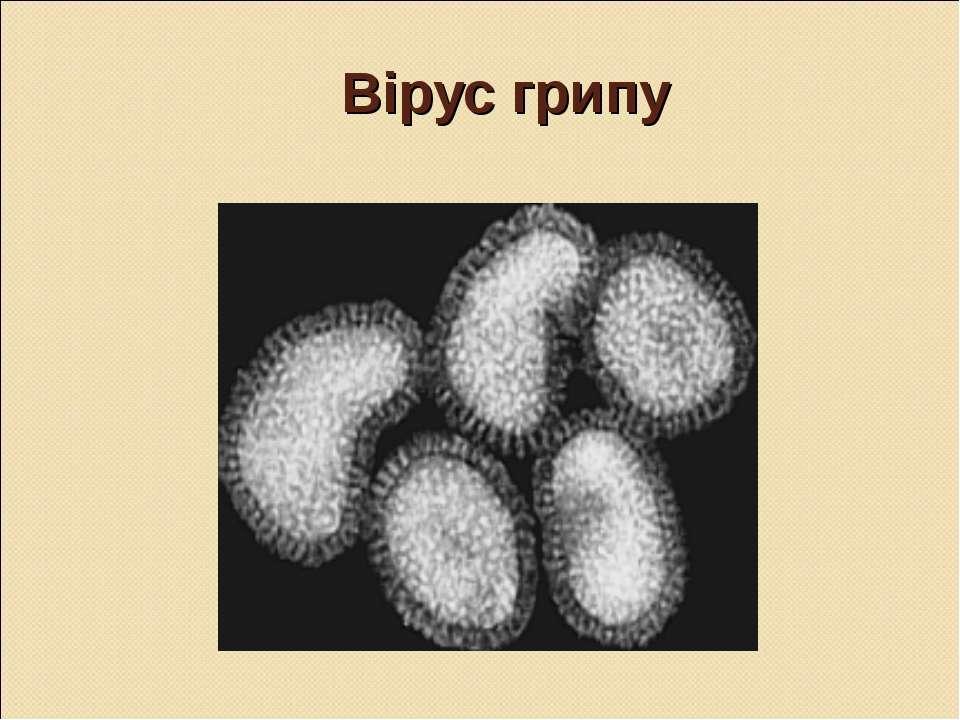 Вірус грипу