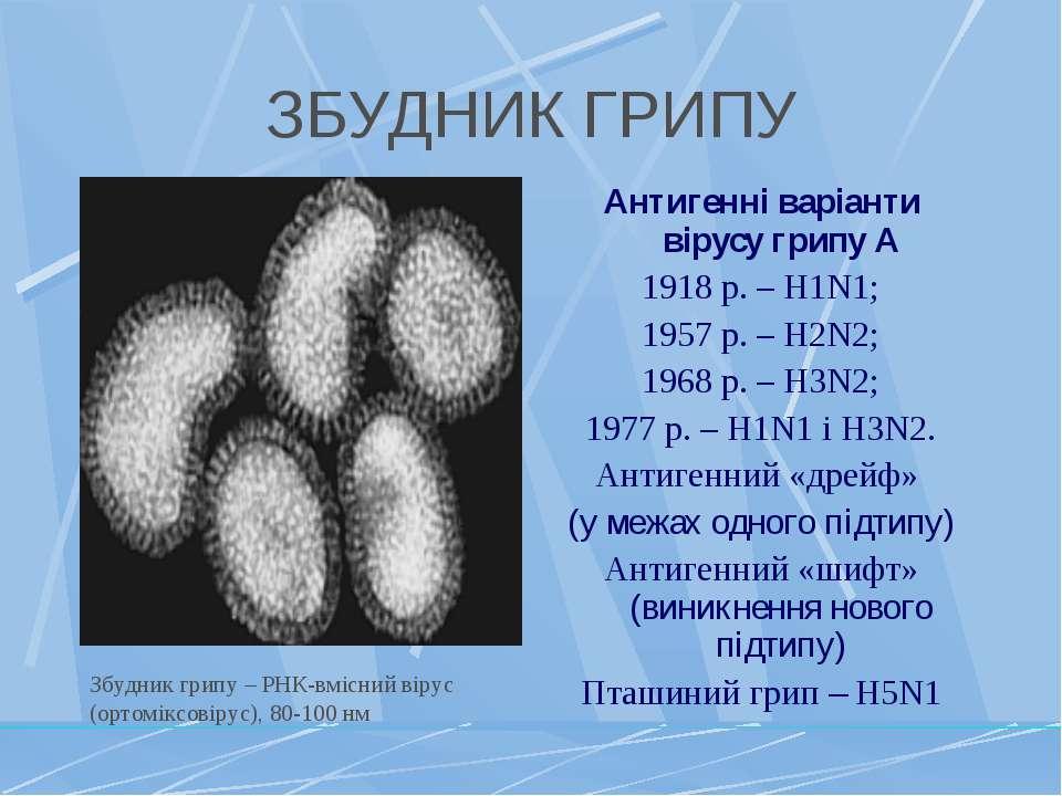 ЗБУДНИК ГРИПУ Антигенні варіанти вірусу грипу А 1918 р. – H1N1; 1957 р. – H2N...