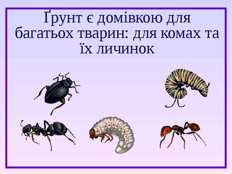 Ґрунт є домівкою для багатьох тварин: для комах та їх личинок